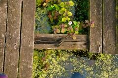 2019_08_HMIS-Mersye-Vale-Pond_014